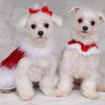 2-dogs-xmas